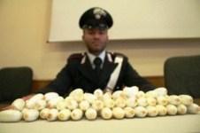 Gli ovuli di droga con cui avveniva il traffico Napoli-Arezzo