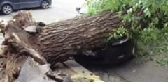 Il tronco caduto che ha provocato l'incidente