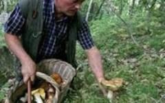Toscana, corsi della Regione per riconoscere i funghi