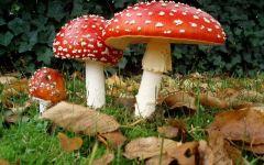 Mangiano funghi, 5 intossicati a Cortona