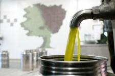 Olio toscano, produzione medio-buona