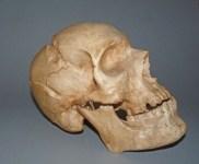 Studio sulle sepolture minori de' Medici