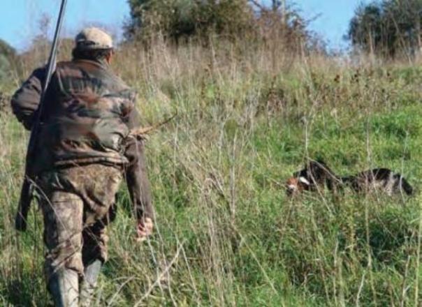 Vanno a caccia di cinghiale ma uccidono un cane nel grossetano