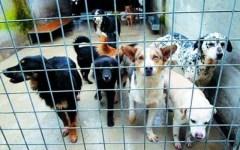 Grosseto: canile abusivo a Follonica. 100 cani in baracche pericolanti