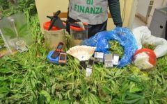 Follonica: coltivavano ed essiccavano marijuana, in 3 in manette