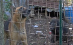 Pistoia, cane salva un altro cagnolino caduto in un fiume