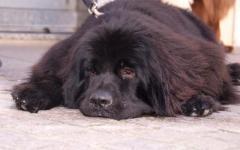 Grosseto, sconto sulla Tares a chi adotta cani anziani