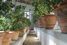 Limonaia del Giardino di Boboli