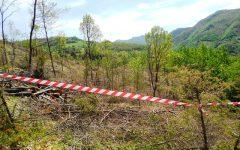 Forestale, multe a raffica per tagli abusivi di alberi in Mugello