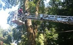 Firenze: l'albero killer delle Cascine crollò perché era stato potato male
