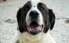 Firenze, volete adottare un cane? Alla Fortezza sette animali in cerca di amore