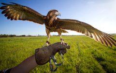 Firenze: la Toscana si prepara all'Expo 2015 con Expo rurale (da giovedì 18 a domenica 21 settembre)