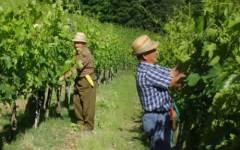 Toscana, vignaioli per un giorno: visite eno-culturali