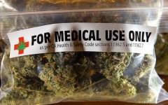 Firenze, cannabis terapeutica dell'istituto farmaceutico militare: nell'estate 2016 i primi 50 chili