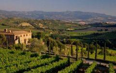 Toscana, premio Touring Club per i prodotti Igp e Dop: dal Fagiolo di Sorana alla Cinta Senese