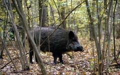 Pistoia: cacciatore muore durante una battuta al cinghiale