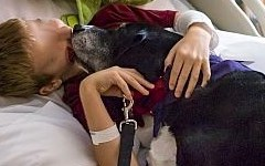 Firenze, ospedale di Careggi: cani in rianimazione con il malato. Via al progetto di Pet therapy