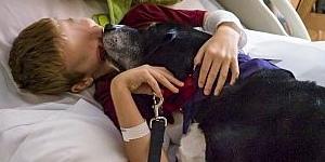 Cani e gatti in ospedale dai padroni malati