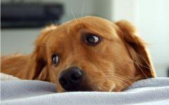 Livorno: cane muore in un incendio, a Cecina, nel tentativo di salvare il cucciolo