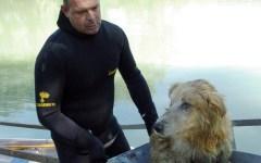 Empoli: canina gettata nell'Elsa. Salvata dai vigili del fuoco