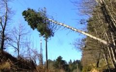 Allerta meteo: vento forte giovedì 12 marzo a Firenze, Prato, Arezzo, Siena e Grosseto. Con raffiche a 80 km l'ora