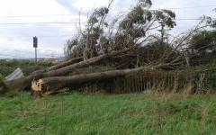 Maltempo, Capannori: ferito dalla caduta di un albero mentre passeggia in centro