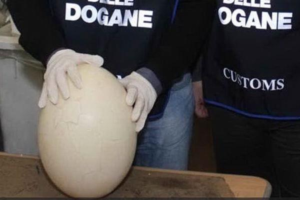 L'uovo preistorico sequestrato all'aeroporto di Orio al Serio
