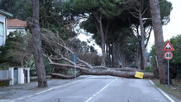 Maltempo, vento forte in provincia di Pisa. Calcinaia, un al
