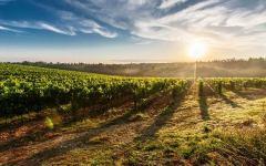 Certaldo, Contemporary Wine: vino, arte, spettacoli e degustazioni