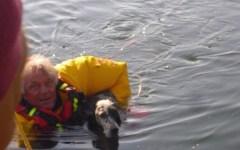 Ponsacco: cane rischia di annegare in un lago, salvato dai Vigili del fuoco