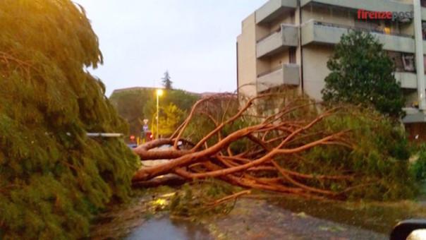 L'albero caduto nella zona del Gignoro durante il violento temporale di stasera, 1 agosto 2015