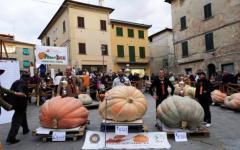 A Foiano della Chiana la zucca più grande d'Italia: pesa 482 chili