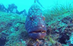 Isola di Capraia: marina protetta al posto dei vecchi vincoli. La decisione del Consiglio regionale della Toscana