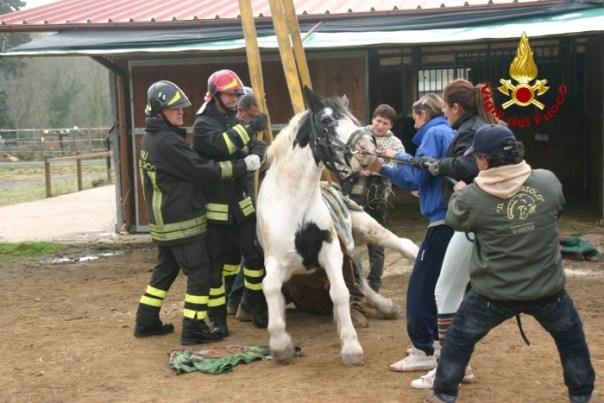Cavallo recuperato con gru vigili fuoco a Livorno