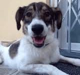 Pistoia: Lorenza, la cagnolina salvata dall'appello su Facebook è stata adottata a Milano