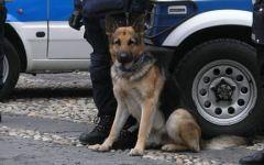 Capannori: ritrovato in buone condizioni il 64enne scomparso