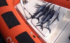 Livorno: pesce illegale, sequestrati 1.700 chili in Toscana. Anche in un ristorante