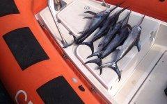 Toscana, prodotti ittici illegali o scaduti: sigilli a 1,5 tonnellate di pesce