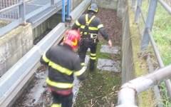 Firenze, cane caduto in una buca salvato dai vigili del fuoco