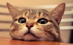 «Un gatto per amico»: un concorso fotografico, aspettando l'Expo felina a Firenze