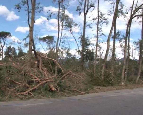 67-alberi-versilia-vento-vaile-apua