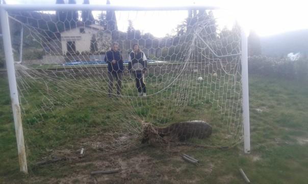 Daino in campo calcio ad Arezzo