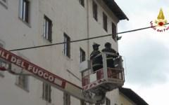 Firenze: volatile imprigionato in una linea aerea liberato con una piattaforma dai Vigili del fuoco