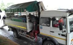 Toscana, Autopalio: la Polstrada salva un cucciolo di capriolo e sanziona (8.000 euro) un camionista