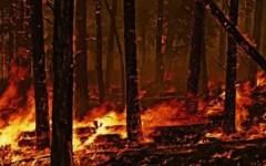 Lari (Pi): vasto incendio di bosco minaccia alcune case. L'intervento dei vigili del fuoco