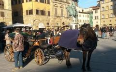 Firenze: protesta degli animalisti contro l'utilizzo dei cavalli per le carrozzelle