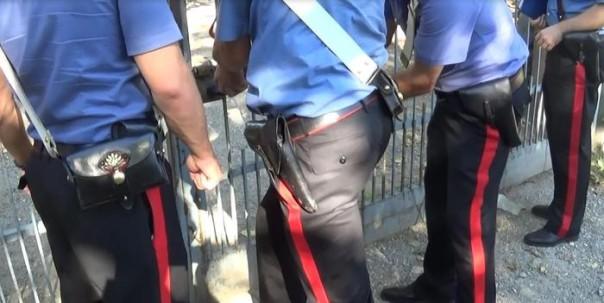 I carabinieri e il portavoce parlamentare M5S, Paolo Bernini, grazie al contributo dell'esperienza del movimento animalista Eital, hanno scoperto a Gessate, in provincia di Milano, 65 cani tenuti in strutture abusive e fatiscenti, cuccioli morti, fattrici con cuccioli tenuti al buio totale, senza acqua e cibo. MIlano, 29 luglio 2015. ANSA/EITAL +++ ANSA PROVIDES ACCESS TO THIS HANDOUT PHOTO TO BE USED SOLELY TO ILLUSTRATE NEWS REPORTING OR COMMENTARY ON THE FACTS OR EVENTS DEPICTED IN THIS IMAGE; NO ARCHIVING; NO LICENSING +++