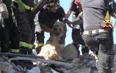Terremoto: cane estratto vivo ad Amatrice. E' stato 10 giorni sotto le macerie