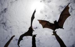 Scienza: nanorobot- pipistrelli scoprono tumori negli anfratti più nascosti del cervello
