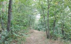 Grassina (FI): trovato in un bosco cadavere di un uomo con la testa staccata